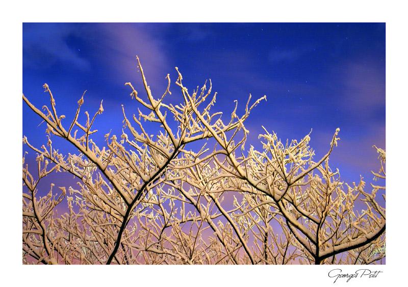 L'amandulellu dans Puesia corsa crw3745rt81